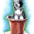 Beardie In A Pot by Patrice Clarkson