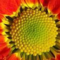 Bee's View by Paul Slebodnick
