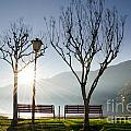 Bench And Trees by Mats Silvan