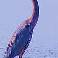 Big Blue Heron At Lake Side by John  Kolenberg