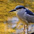 Bird by Calvin Smith