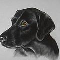 Black Labrador by Patricia Ivy