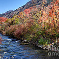 Blacksmith Fork River In The Fall - Utah by Gary Whitton