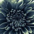 Blue Flower by Dawn OConnor