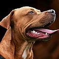 Blue The Rhodesian by Isabella F Abbie Shores FRSA