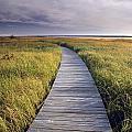 Boardwalk Along The Salt Marsh by Darwin Wiggett