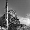 Boulders by Anthony Citro