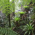 Bromeliad Bromeliaceae And Tree Fern by Cyril Ruoso