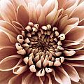 Brown Flower by Dawn OConnor
