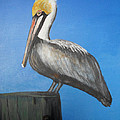 Brown Pelican  by Edward Walsh