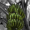 Bunch Of Bananas by Gord Patterson