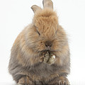 Bunny Grooming by Mark Taylor