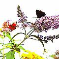 Butterfly Bush by Ulrich Lange