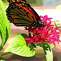 Butterfly Flowers by Peggy Starks