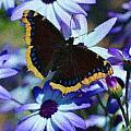 Butterfly In Blue by Heidi Smith