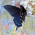 Butterfly Love by Betty LaRue