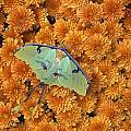 Butterfly On Flowers by Natural Selection Jeff Lepore