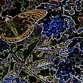 Butterfly by Phil Huettner