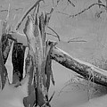 Bw Snowy Stump by Amara Roberts