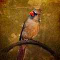 Cardinal II by Jai Johnson