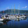 Carlingford Yacht Marina, Co Louth by The Irish Image Collection