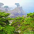 Carmel California - Lone Pine - 03 by Gregory Dyer
