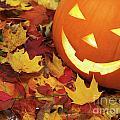 Carved Pumpkin On Fallen Leaves by Oleksiy Maksymenko