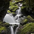 Cascading Creek In Temperate Rainforest by Matthias Breiter