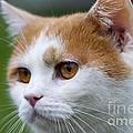 cat by Michal Boubin