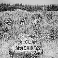 clan mackintosh memorial stone on Culloden moor battlefield site highlands scotland by Joe Fox