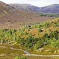 Cleared Scots Pine Forest by Duncan Shaw