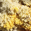 Close-up Of Yellow Salt Crystals by Richard Roscoe