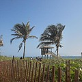 Coastal Life by Sheila Silverstein
