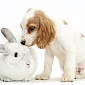 Cocker Spaniel And Rabbit by Mark Taylor