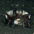 Coconut Octopus In Shell, North by Mathieu Meur