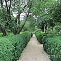 Colonial Garden Path by Susan Carella
