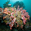 Colorful Reef Scene, Komodo, Indonesia by Mathieu Meur