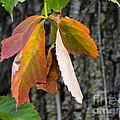 Colors Of Fall by Julie Palencia