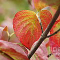 Colours Of Autumn by Eena Bo