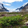 Columbia Icefield by Ginevre Smith