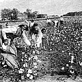 Cotton Industry, Early 20th Century by