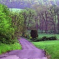 Country Road by Susan Carella