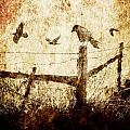 Crows And The Corner Fence by Randall Nyhof
