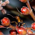 Curious Ant by Shannon Harrington
