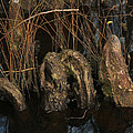 Cypress Knee Monster by Jennifer Stockman