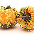 Decorative Squash by Ted Kinsman