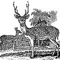Deer by Granger
