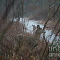 Deer Portrait by Neal Eslinger