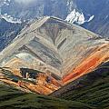 Denali National Park by Harvey Barrison