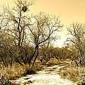 Desert Trail by Kume Bryant